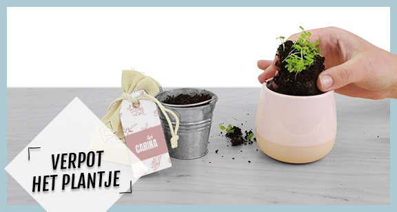 Brievenbuspakketje Plantje Verpotten Instructie